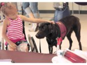 Paws4people, Inc. Awarded Wounded Warrior Service Dog Program Grant