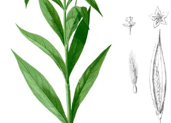 Expeditions Study Native Herbal Medicines