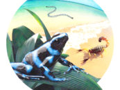 Harnessing Nature's Vast Array of Venoms for Drug Discovery