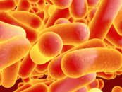 New Cancer Treatments: Scientists Have Programmed Bacteria to Kill Cancer