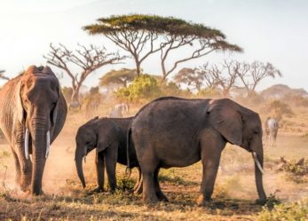 Visualizing a Trip to Kenya Africa from the Safety of Your Home