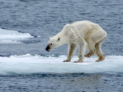Our Planet is Melting. Who Cares?
